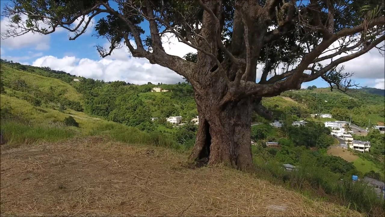 El Centinela de Orocovis, Puerto Rico